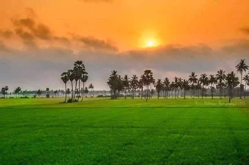A Beautiful Picture From India That Resembles The Colors Of Indian Flag 815 X 540 Colours Of Indian Flag Indian Flag Indian Flag Colors