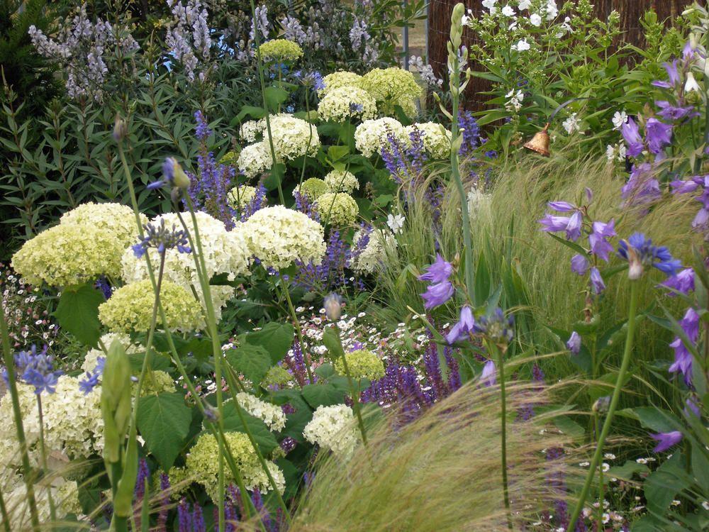 Hortensien Das Passt Dazu Ziergarten Garden Plants Und Hydrangea