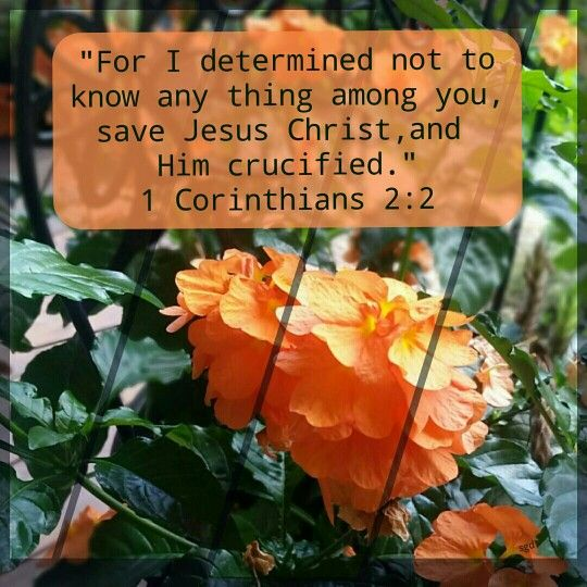 BIBLE VERSES EACH DAY - 1 Corinthians 2:2