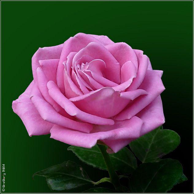The Beauty of a Flower - Community - Google+