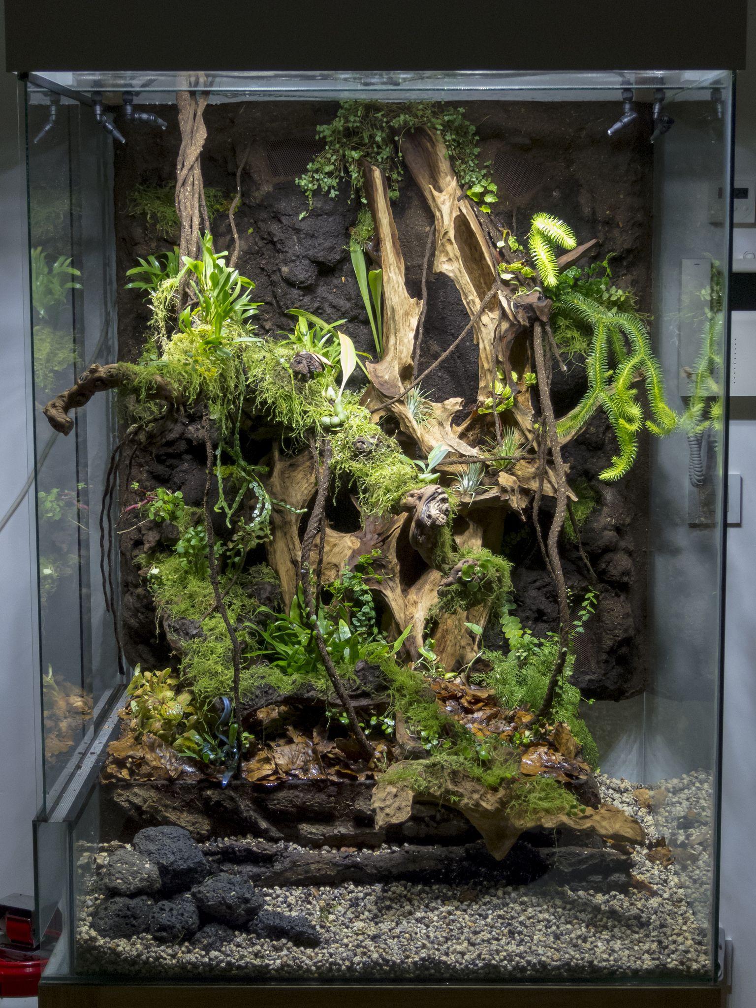 img 9221 paluvivarium pinterest terrarium ideen pfeilgiftfr sche und schlangen. Black Bedroom Furniture Sets. Home Design Ideas