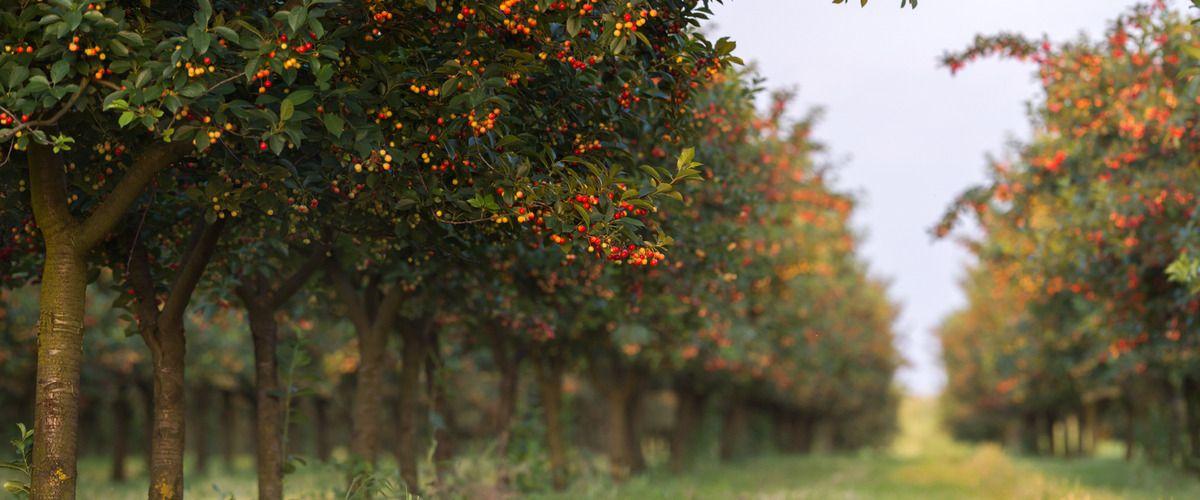 تحميل هذه الصورة شجرة البرتقال نبات وودي نبات الخلفية ألبوم و Psd أو ناقل الملف المصدر Lake Landscape Landscape Lake View