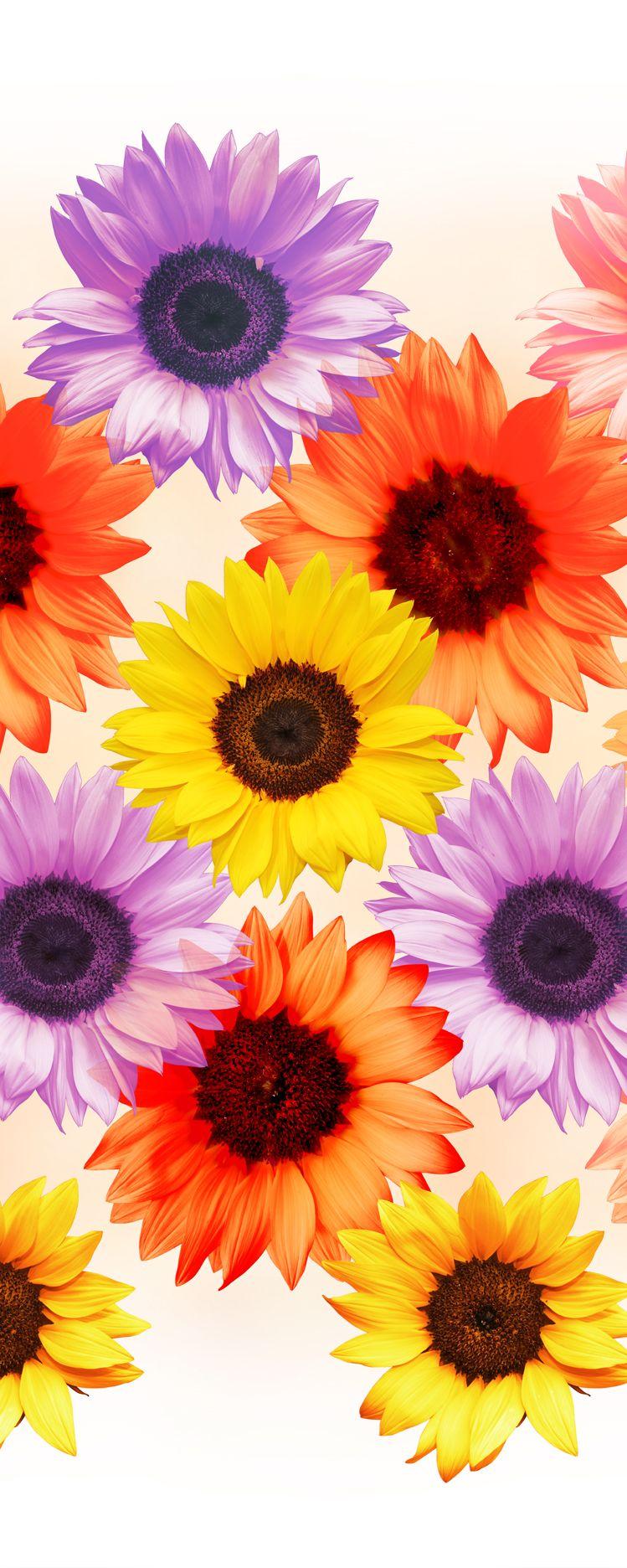 Die Sonnenblume steht für pure Fröhlichkeit, Spaß und menschliche ...