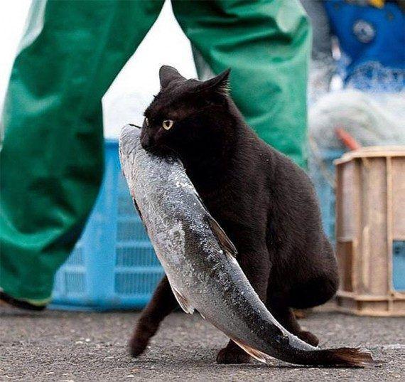 Коты, которых застали врасплох / Приколы