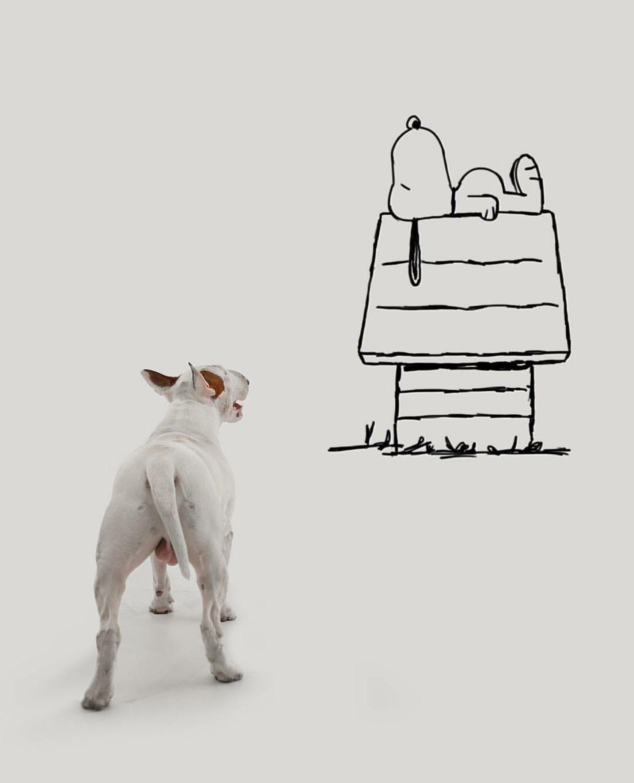 Snoopy And Jimmy Choo ~ Jimmy Choo & Rafael Mantesso