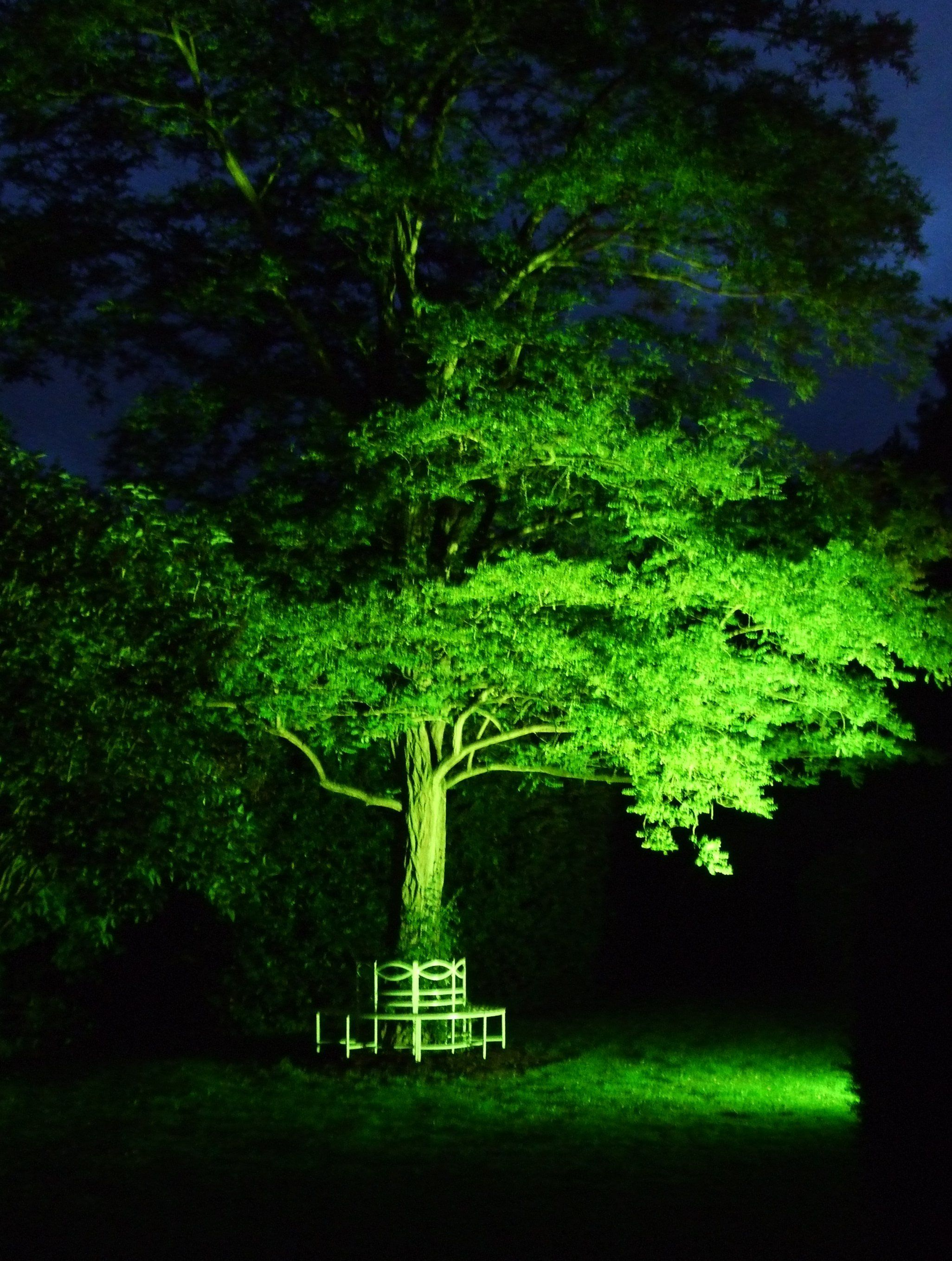 terrific exterior uplighting. Outside wedding and event decoration  Uplighting to trees either in the garden or Courtyard by
