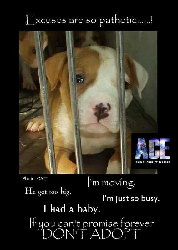 A Pet Deserves To Be Loved For Their Entire Life If You Can T Promise Them That Don T Get A Pet Animals Dogs Pitbulls