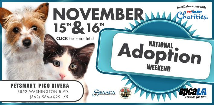 National Adoption Weekend this Saturday & Sunday at the