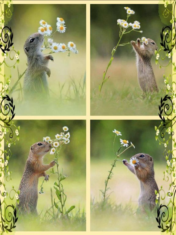 Adorable petite souris