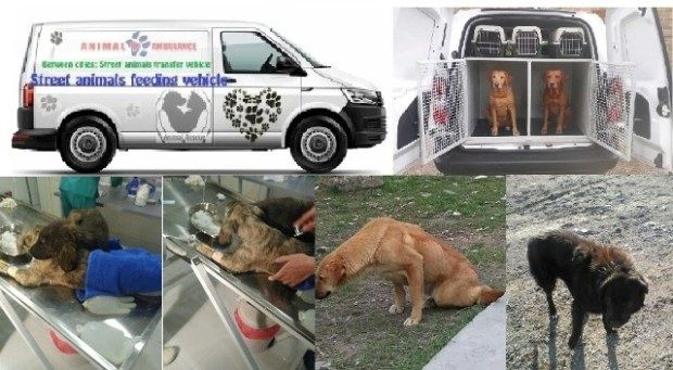 Fundraising Campaign To Help Animals Donations Needed Https Gogetfunding Com Help Us Buy Ambulance Van Sosidogfu Animal Donations Animal Advocacy Animals