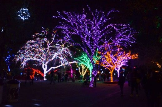 Phoenix Zoo Attraction With 3 5 Million Lites For Christmas Best Christmas Lights Zoo Lights Christmas Events