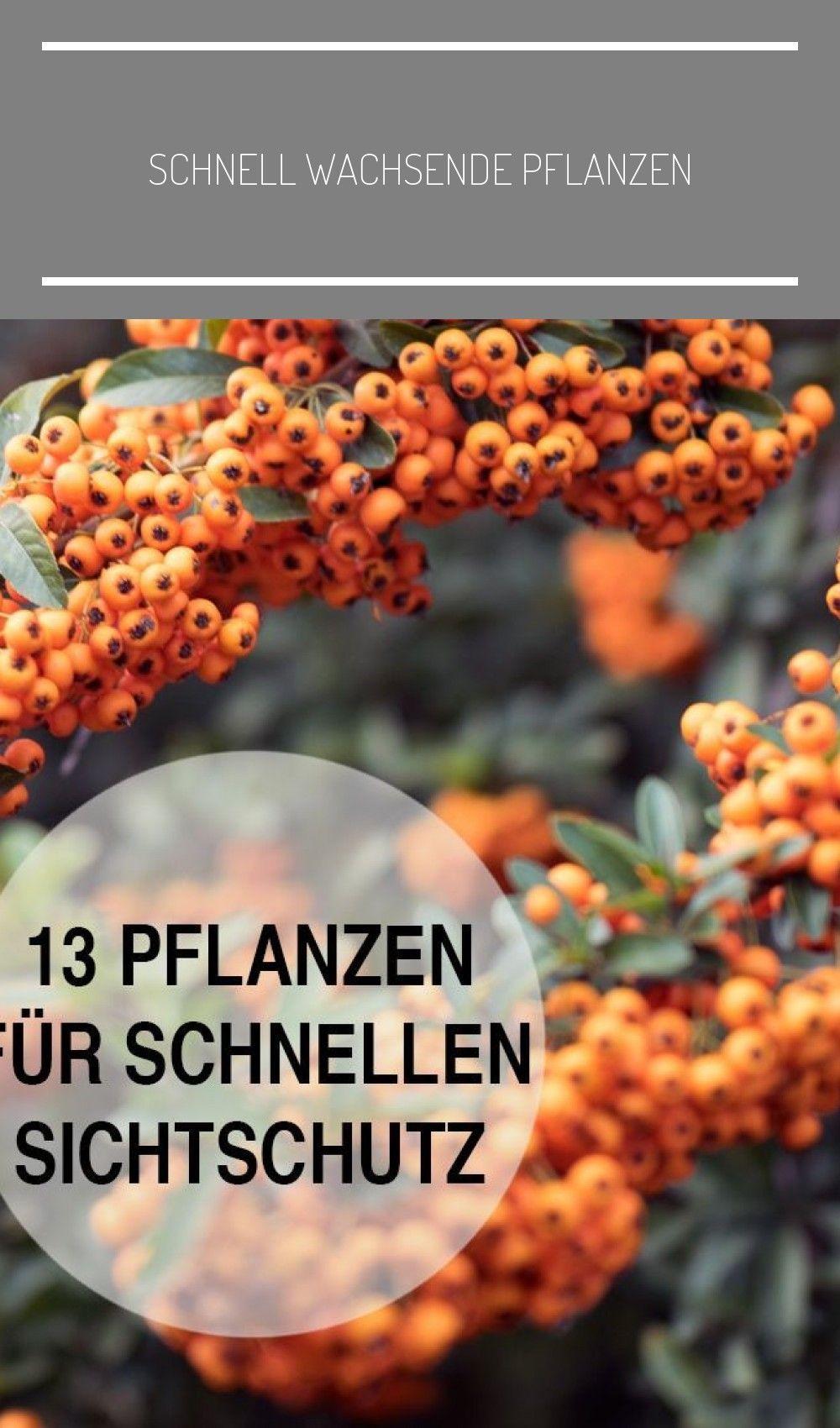 schnell wachsende pflanzen schnellwachsendepflanzen in 2020 garten kilian newbie