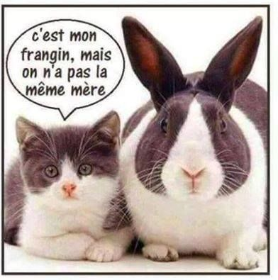 Chat Lapin Humour Drole Blague Humour Drole Humour Animaux Animaux Droles