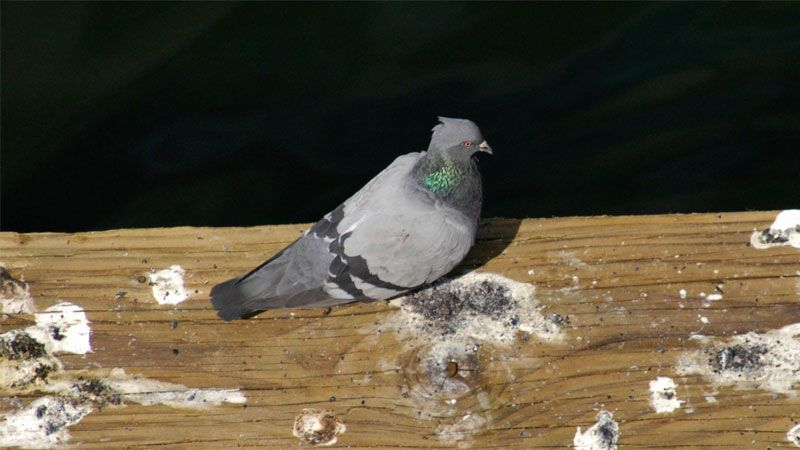 Pin On Birds In The Backyard