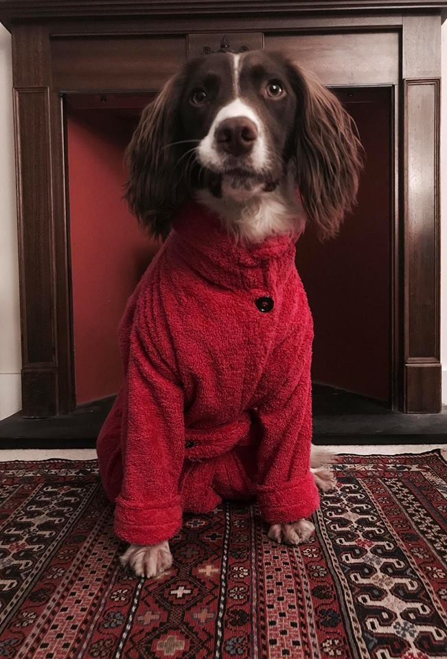 Dog Drying Coat (Towelling Robe) | Dog Gifts | Pinterest | Dressing ...