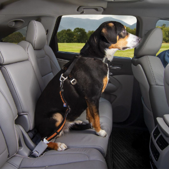 Canine Projectile   Dogs   Dog seat belt, Dogs, Dog seat