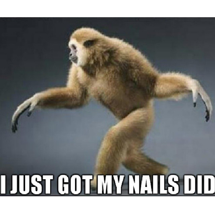 I Just Got My Nails Did Whod Knew A Primate Could Say It All Monkey Meme