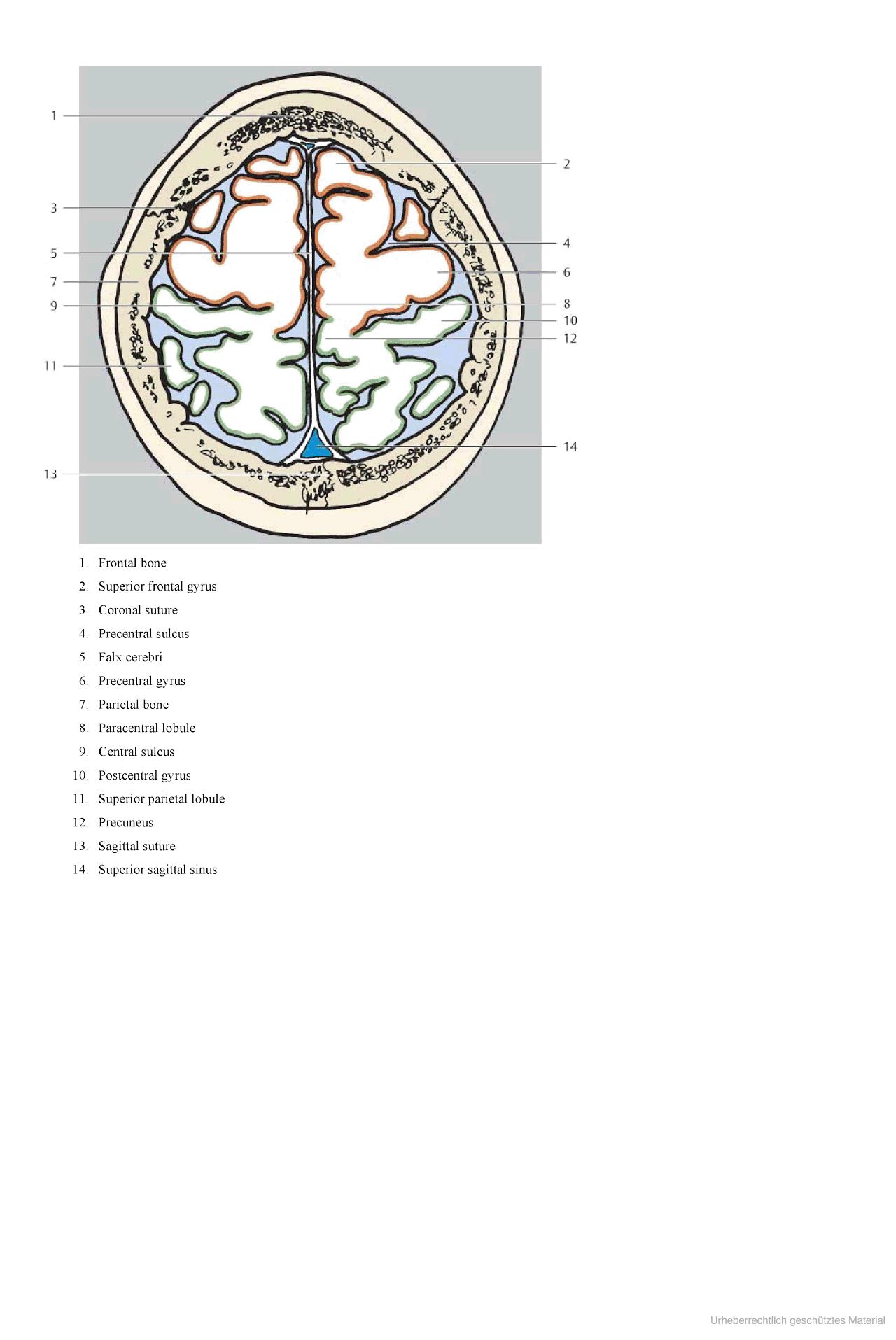 Pocket Atlas Of Sectional Anatomy Medizin Pinterest