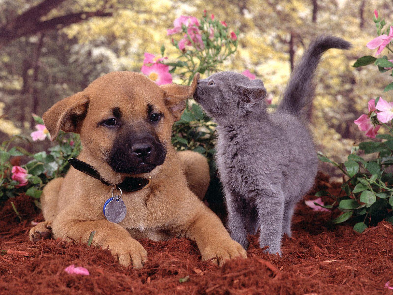 Best Cute Dog N Cat Wallpapers - 7dbd04d091d74dabec2dde655d804296  Gallery_689557 .jpg
