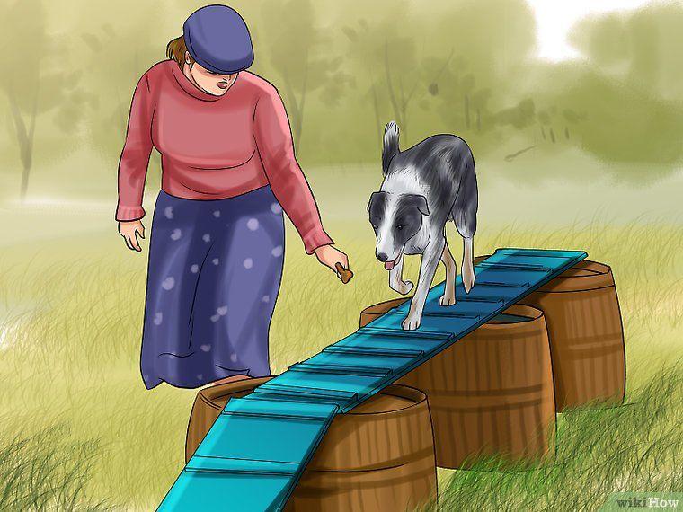 Build a dog agility course dog agility course diy dog