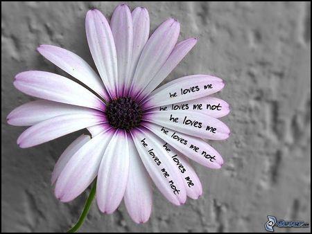 love me, love me not... (me quiere, no me quiere...)