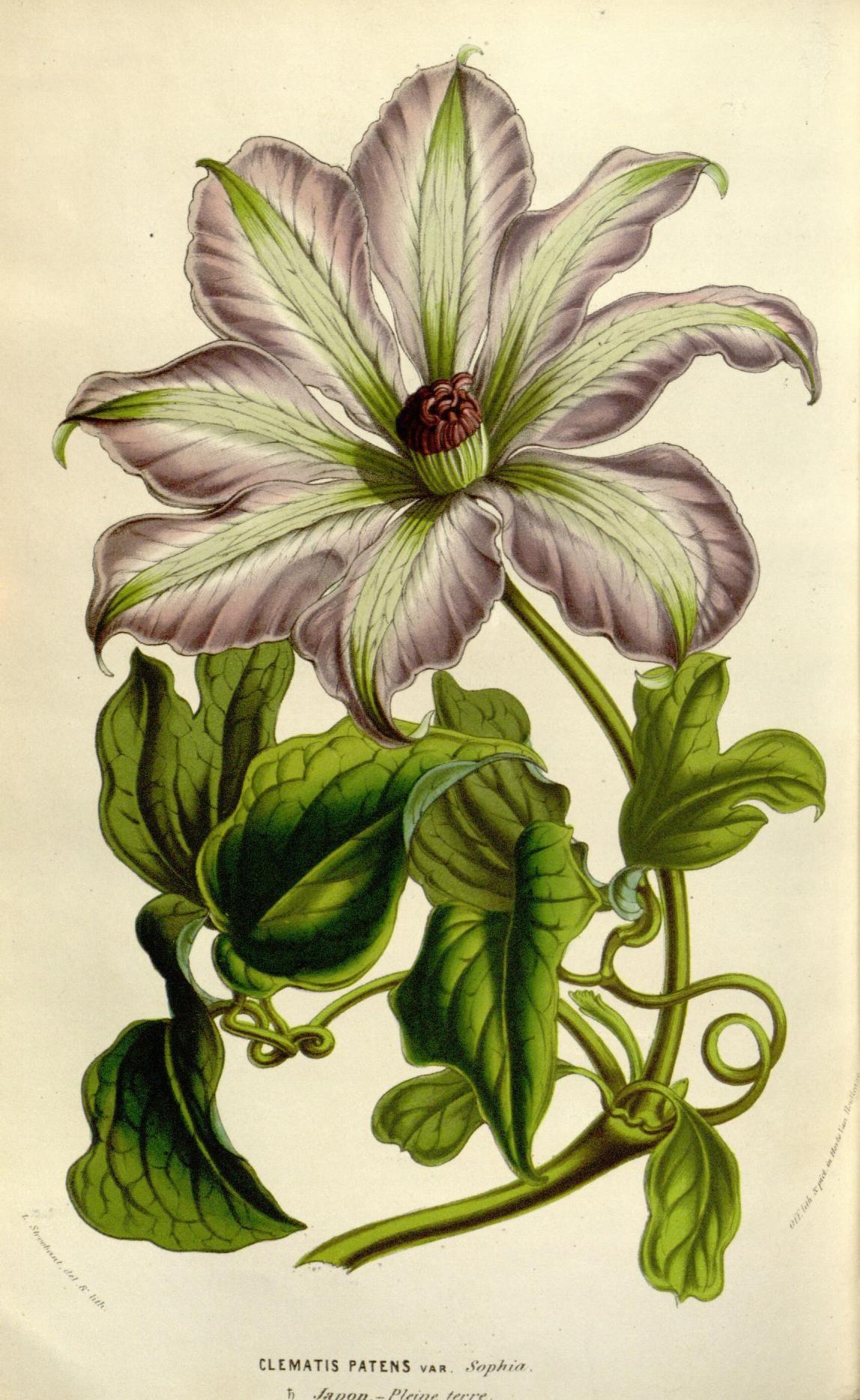 8 1852-53 - Flore Des Serres Jardins De L