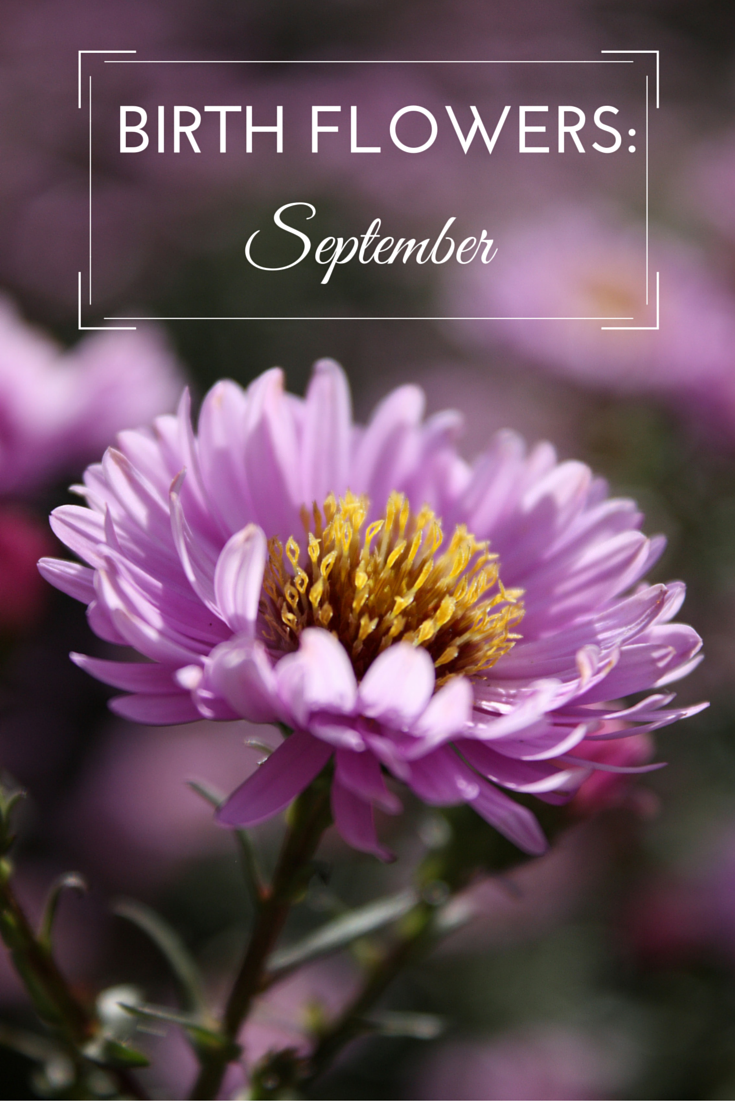 Birth flowers september birth month flowers pinterest birth flowers are a popular birthday gift and choosing the recipients birth month flower makes it more personal take a look at the birth flowers for september izmirmasajfo