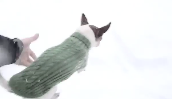 Presentan En Video Por Qué Los Chiguaguas No Son Buenos Cerca De La Nieve #Video
