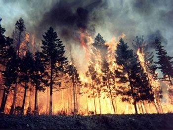 Ambiente:in fumo 13.630 ettari di boschi nei primi 8 mesi del 2013