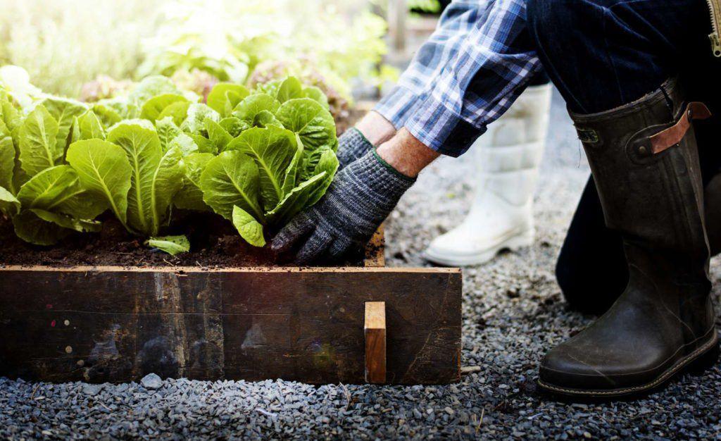 Hochbeet Im Herbst Bepflanzen Garten Ideen Mit Herz Pinterest