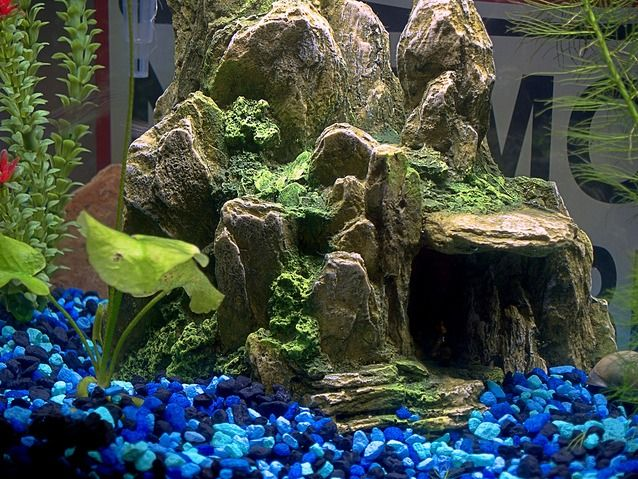 You Might Find Useful Mini Garden Decorations At The Pet Store. Something  Built For A · Aquarium DecorationsWood DecorationsFreshwater ...