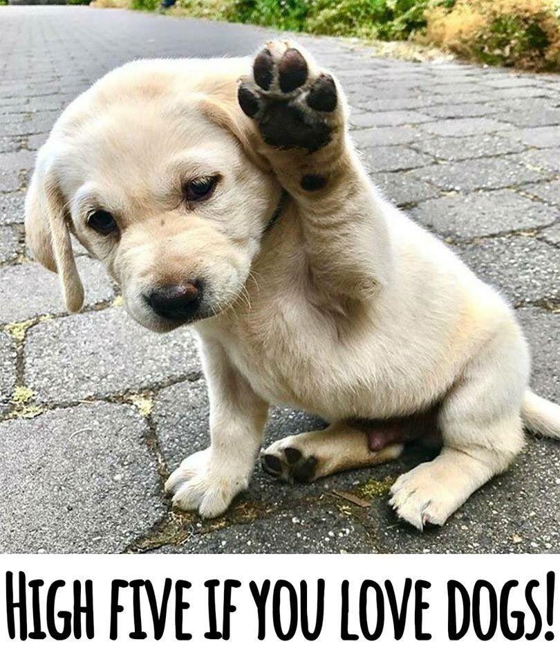Maddie The Wonderdog On Twitter Puppies Baby Animals Animals