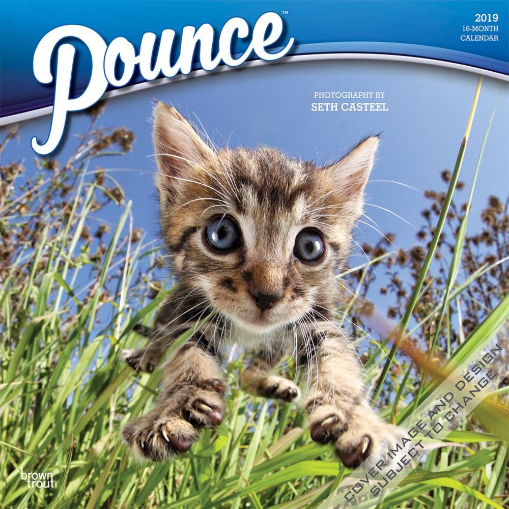 Pounce 2019 12 X 12 Inch Monthly Square Wall Calendar Kitten Humor Isbn 978 1 4650 7527 7 Kittens Funny Wall Calendar Kitten