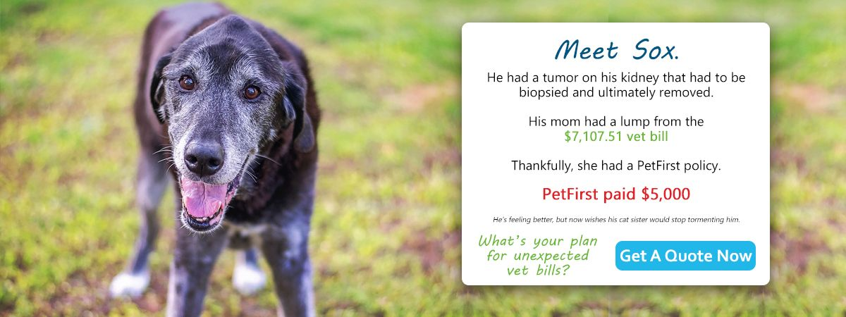 Trusted Pet Insurance For Dogs And Cats Petfirst Pet Insurance Pet Insurance For Dogs Pet Insurance Dog Cat