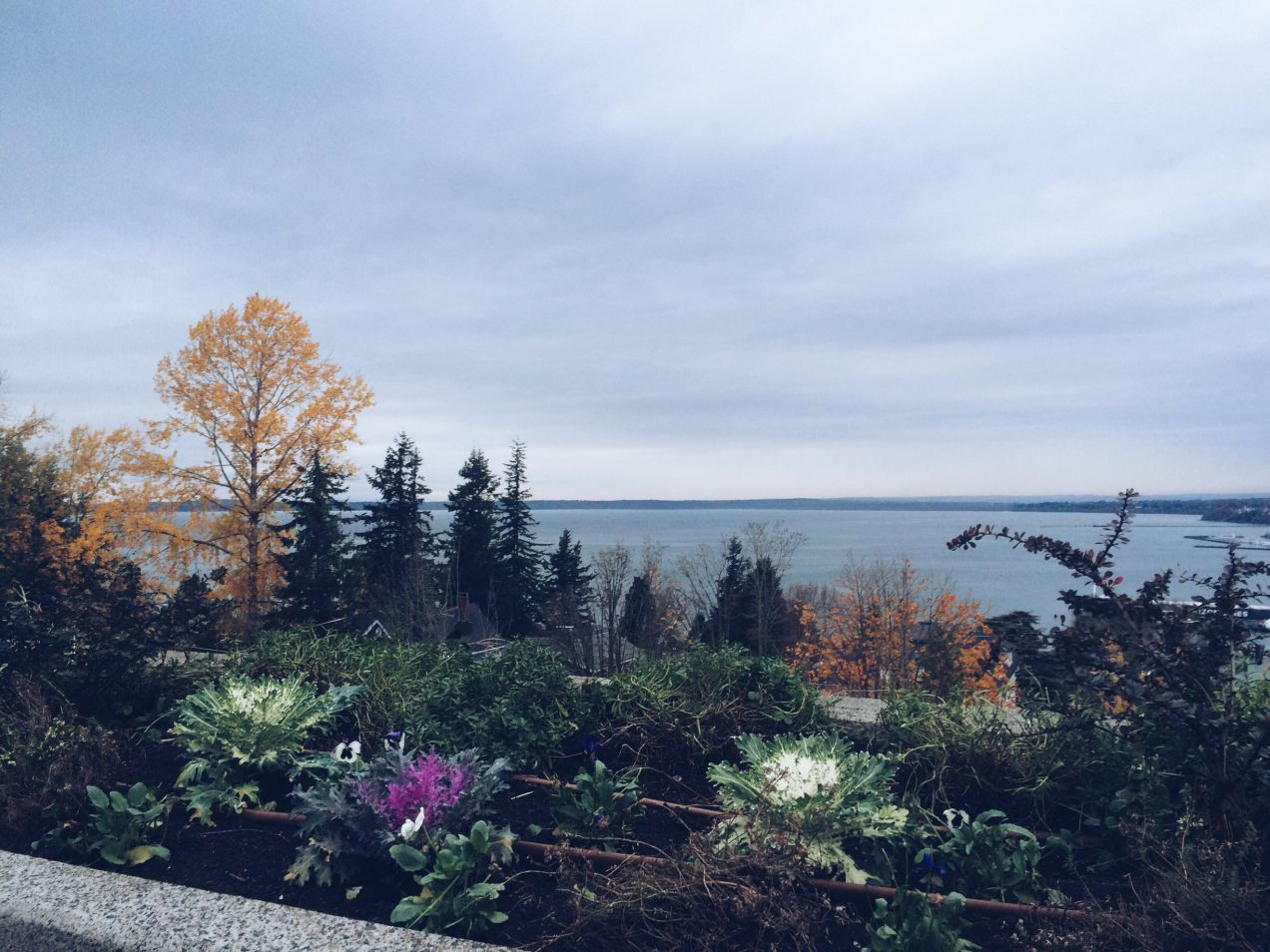 Bellingham | a little slice of clementine