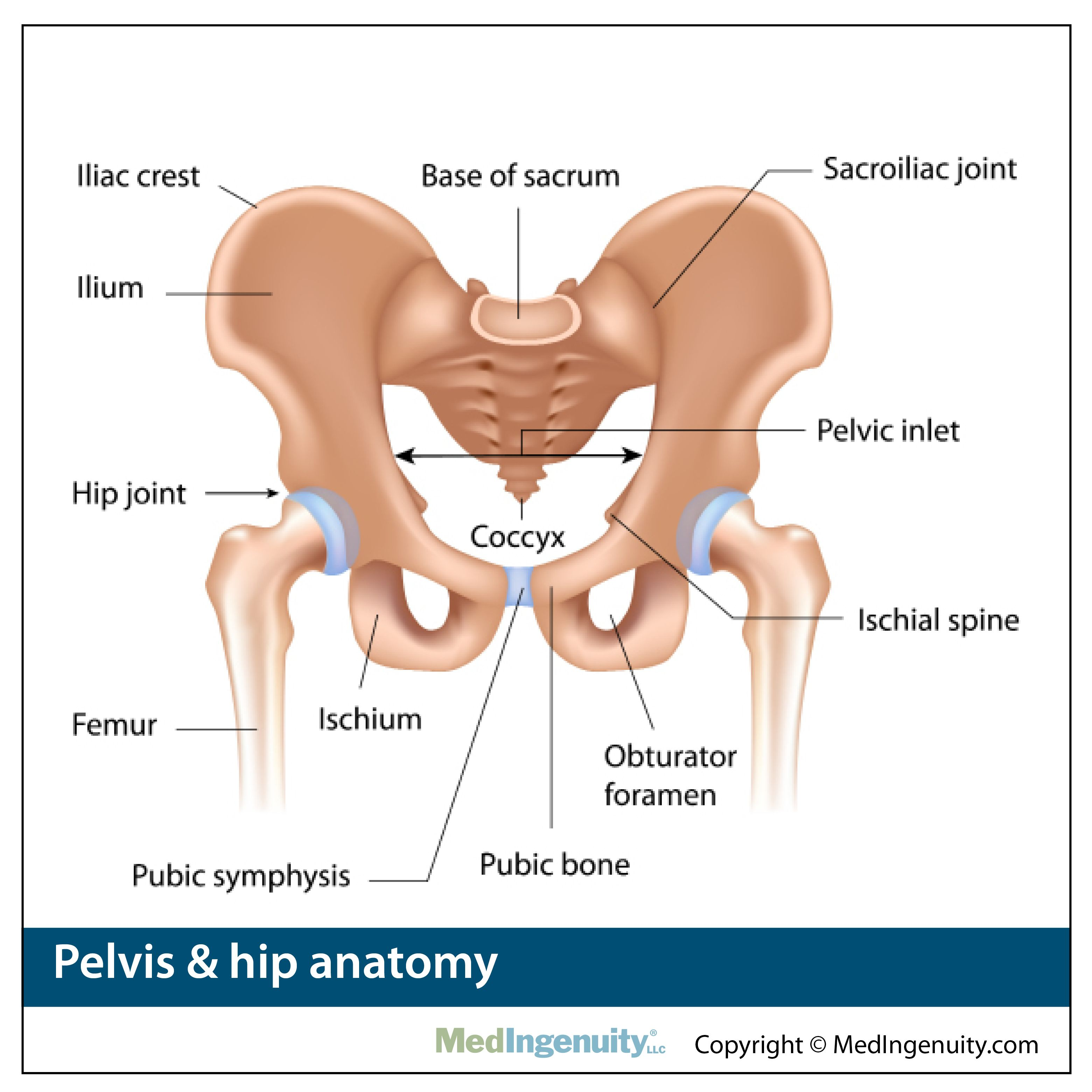 hip joint diagram hip joint diagram northwest hills surgical hospital hip pain [ 3120 x 3120 Pixel ]