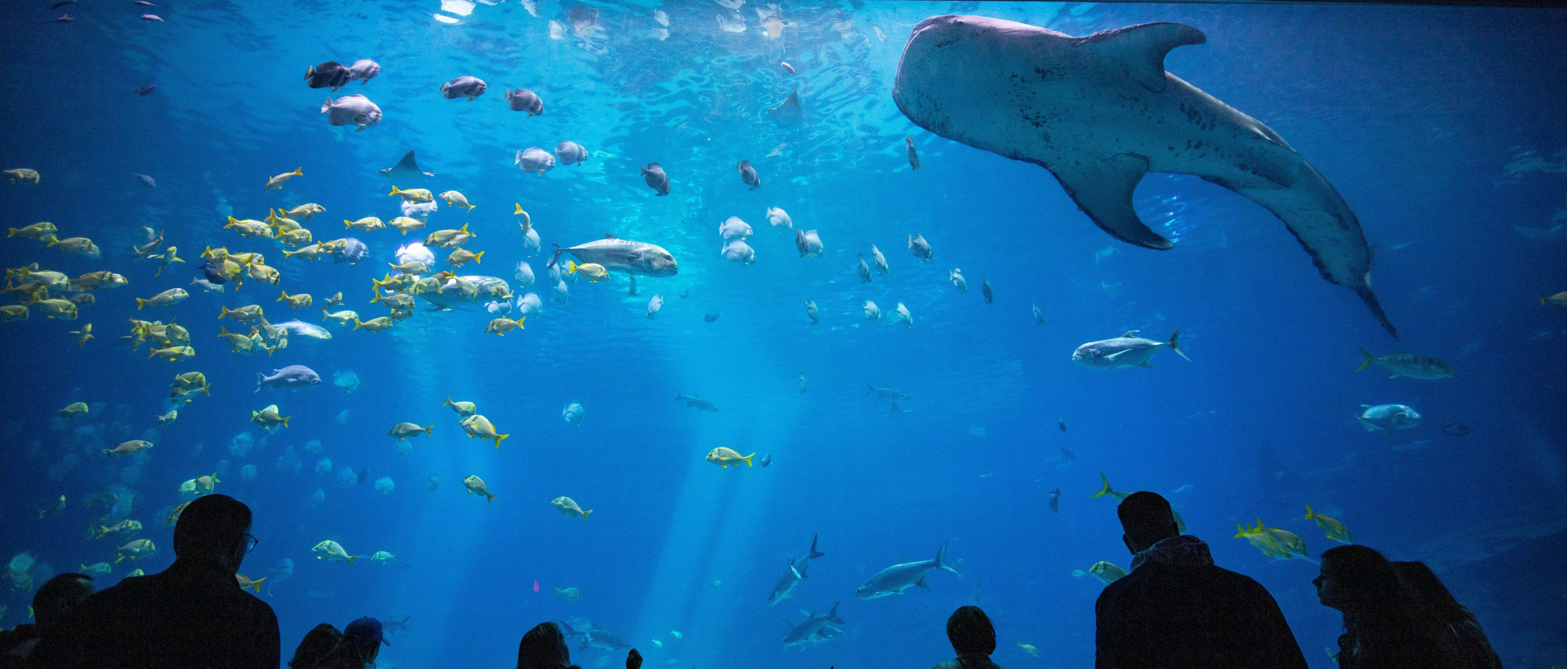 Live Views From Aquarium in 2020