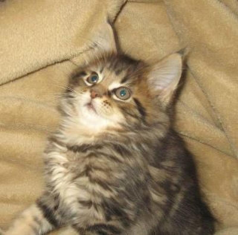 Pin On Gorgeous Felines