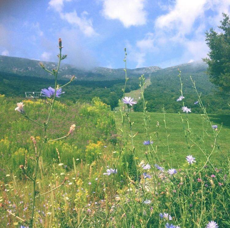 farmcore | Tumblr in 2020 | Nature aesthetic, Pictures, Nature