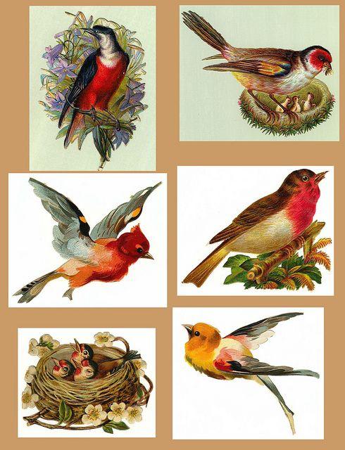 decoupage birds printable free to use - Printable Bird Pictures 2
