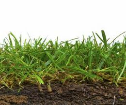 Grass Seed Good For Sandy Soil With Images Organic Gardening Soil Sandy Soil Best Grass Seed