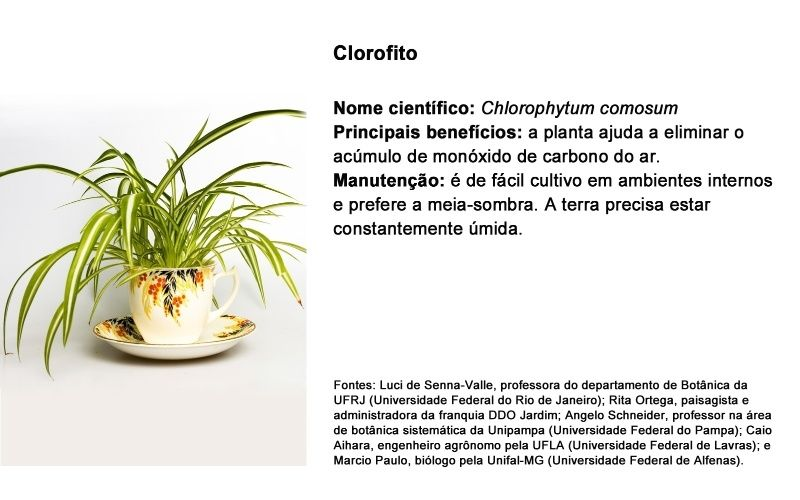 Dez plantas que ajudam a limpar o ar da casa e até afastam insetos - Casa e Decoração - UOL Mulher