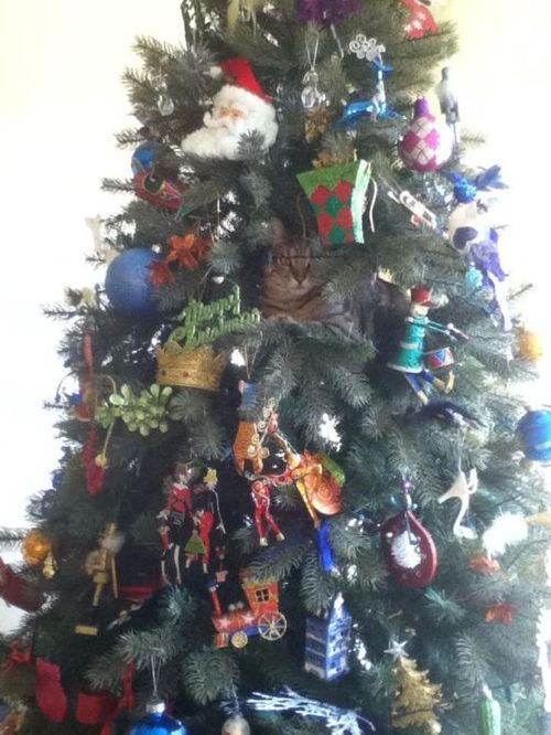 Today Is Caturday Tumblr Cat Christmas Tree Christmas Cats Cat Holidays