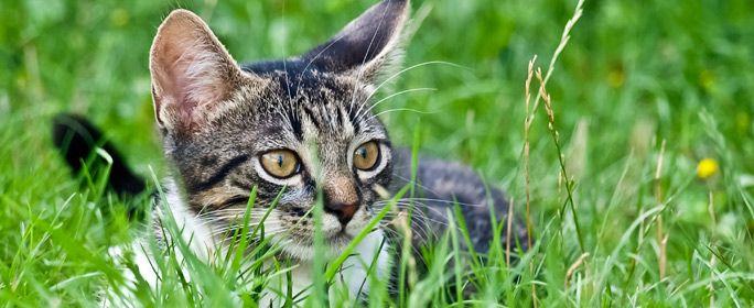 Warum Viele Krauter Fur Katzen Giftig Sind Und Welche Nicht In 2020 Katzen Pferde Und Hunde Krauter