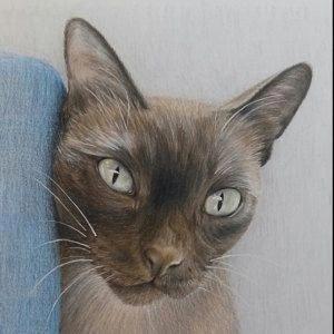 Cats Craigslist CatsChocolate Cat has fleas, Cat hug