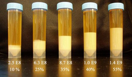 Wyeast Laboratories : Commercial : Breweries : Technical Information : Yeast Harvesting
