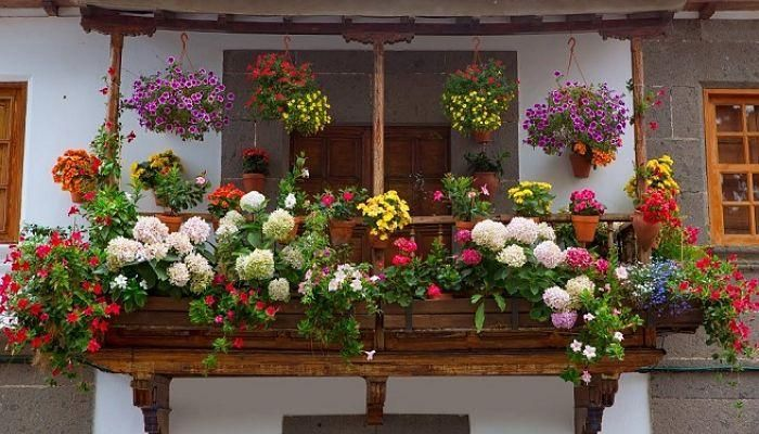 Plantas colgantes de exterior para vergeles en balcones y - Maceteros colgantes para balcones ...