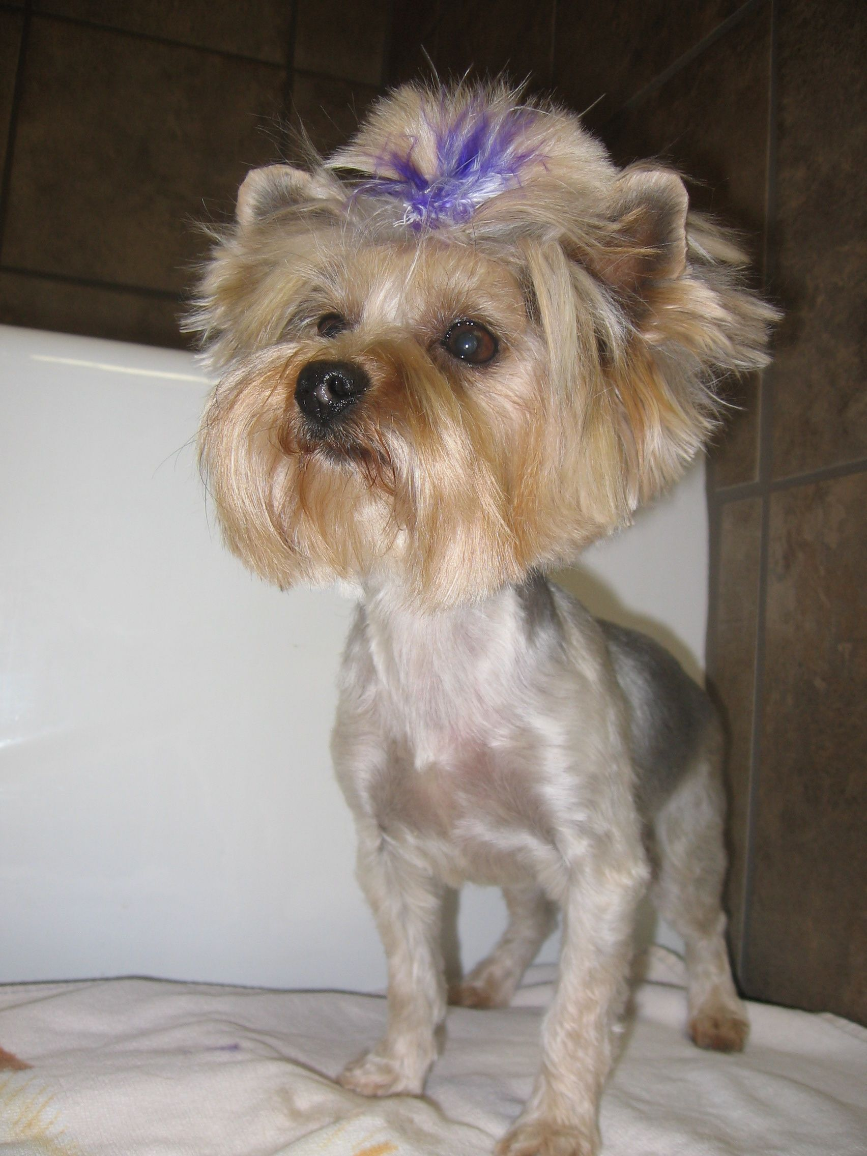 How To Make Hair Bows For Small Dogs
