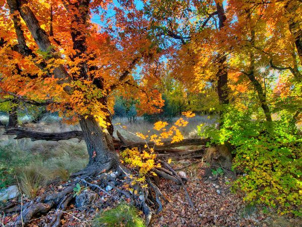 Dog Canyon, Guadalupe Mountains National Park, Texas-  this is a hike with beautiful fall color!