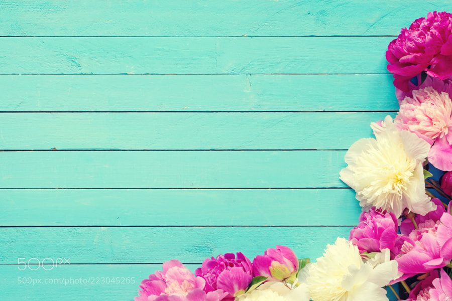 Peonies On Turquoise Wooden Background Peonies Background Floral Background Vintage Flowers